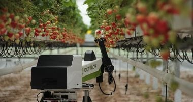 Robot can pick, sort and fill strawberries, Learn details