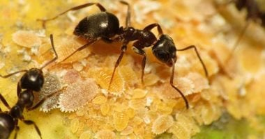 5 scientific facts you do not know about ants