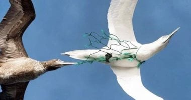 Plastic waste affects life of seabirds