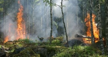 After Germany, Norway stops aid to Brazil on Amazon deforestation