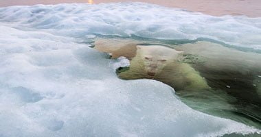 Scientists find plastic materials in the floating ice of Arctic Ocean