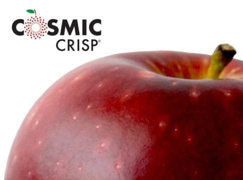 New apple variety Cosmic Crisp triggers unprecedented hype in the United States